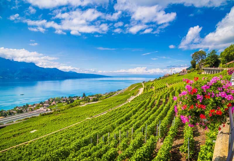 Lavaux vineyards, Montreux Riviera.