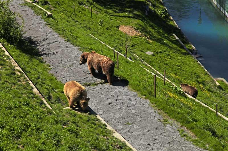 Bern's Bear Park