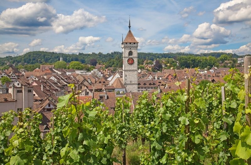 Schaffhausen is surrounded by vineyards